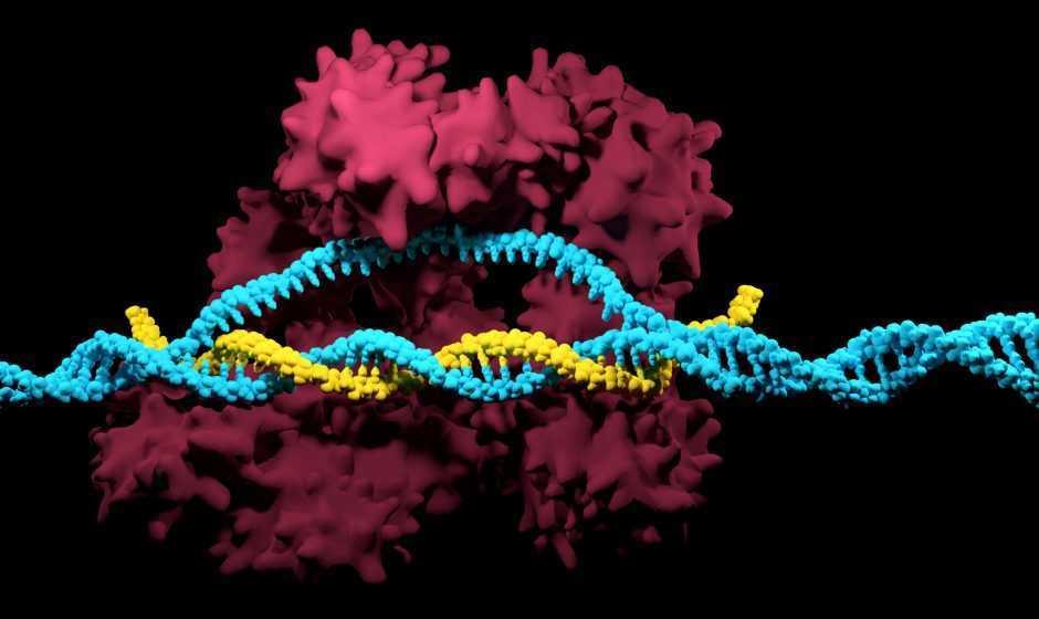 Nobel Chimica 2020: vince la CRISPR per l'editing genetico