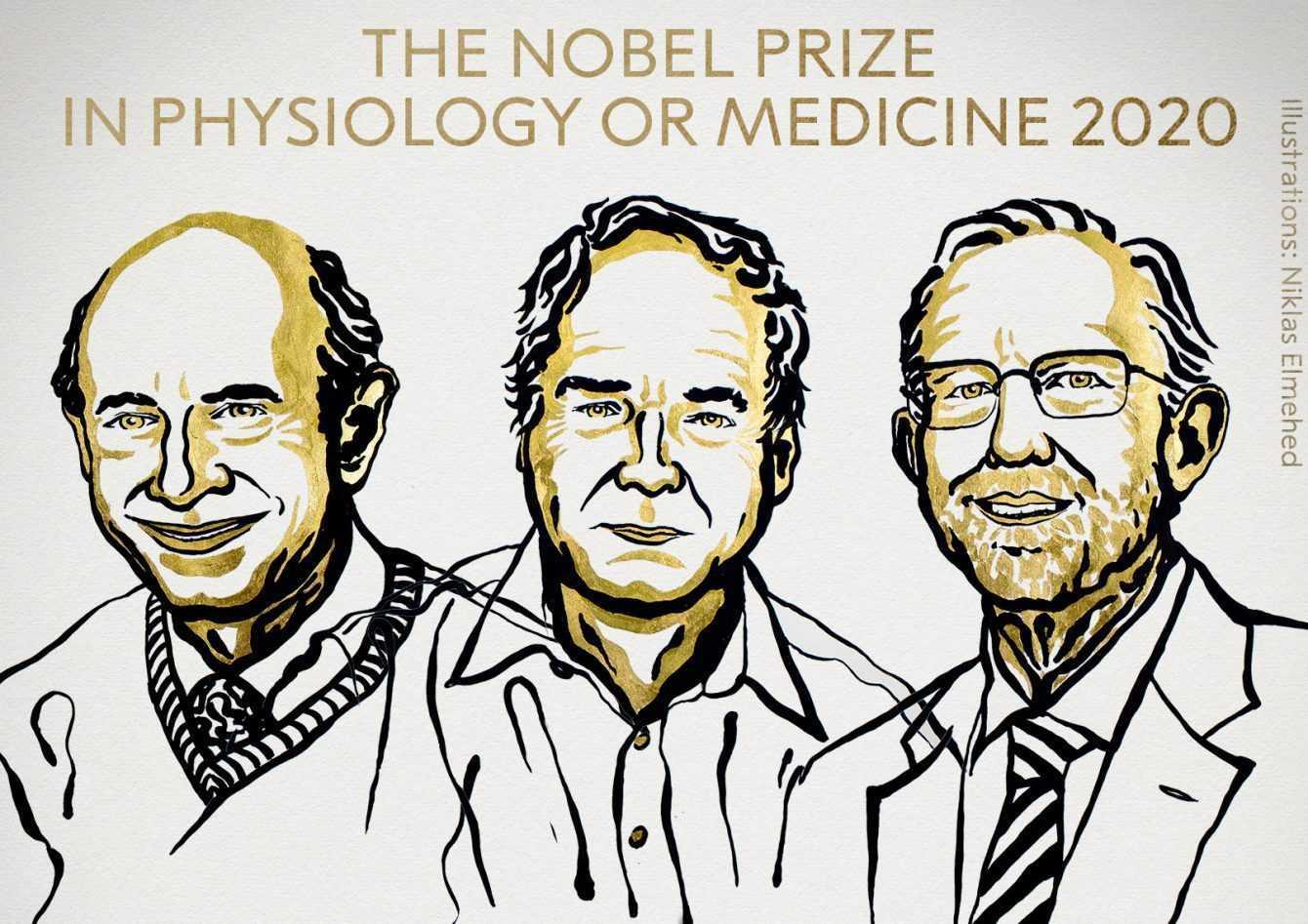 Nobel Medicina 2020: trionfano gli scopritori dell'epatite C