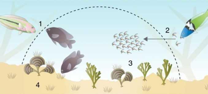 Agricoltura: uno strano allevamento marino