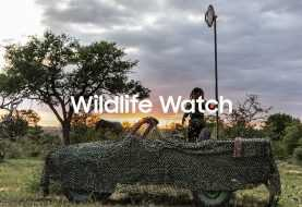Wildlife watch: ranger virtuale grazie a Samsung