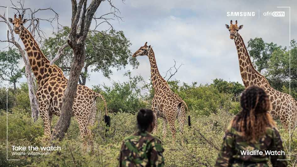 Wildlife watch: ranger virtuale grazie a Samsung