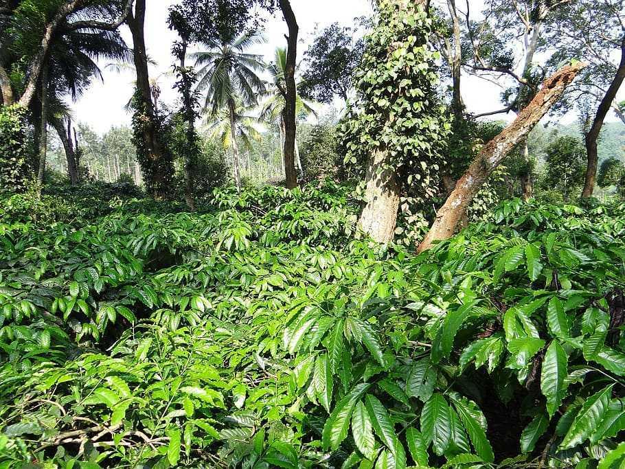 Un caffè per gli uccelli: dalla coltivazione alla salvaguardia