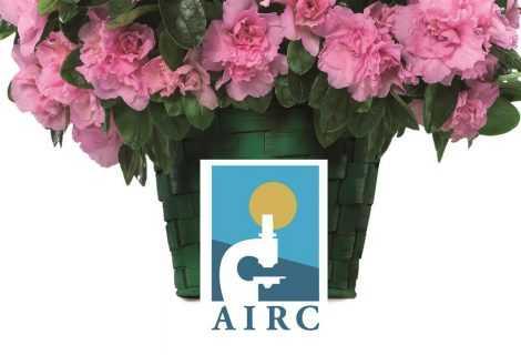 Festa della Mamma: Amazon propone l'Azalea dell'AIRC