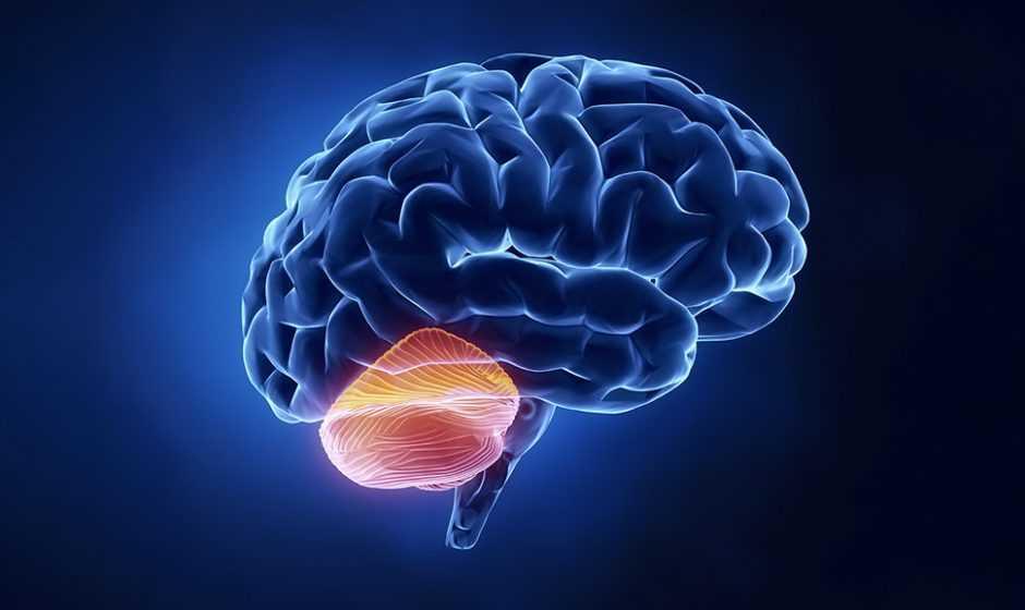 Cervelletto: nuovo ruolo nell'evoluzione del cervello umano