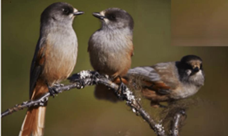 Fiducia: riconoscere il linguaggio degli amici