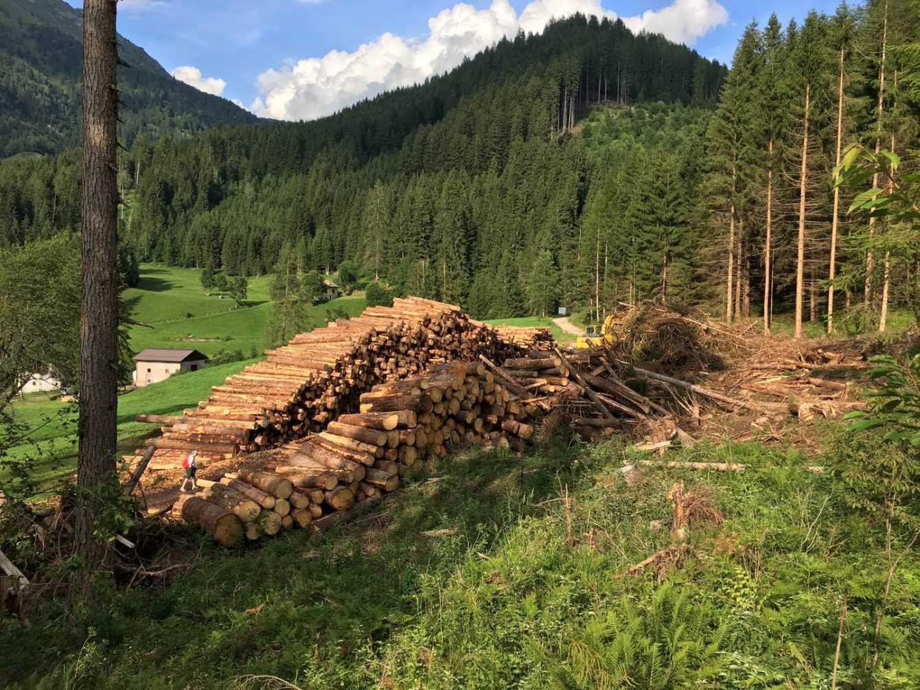 Plant a Tree with HANNspree: riforestazione in Val di Fiemme